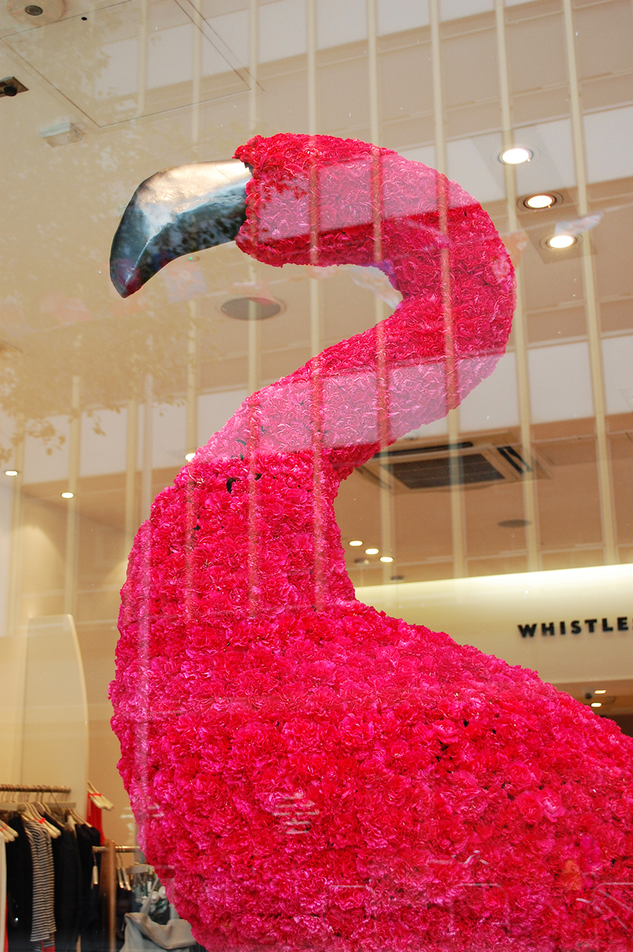 Whistles pink carnation flamingo spring window display