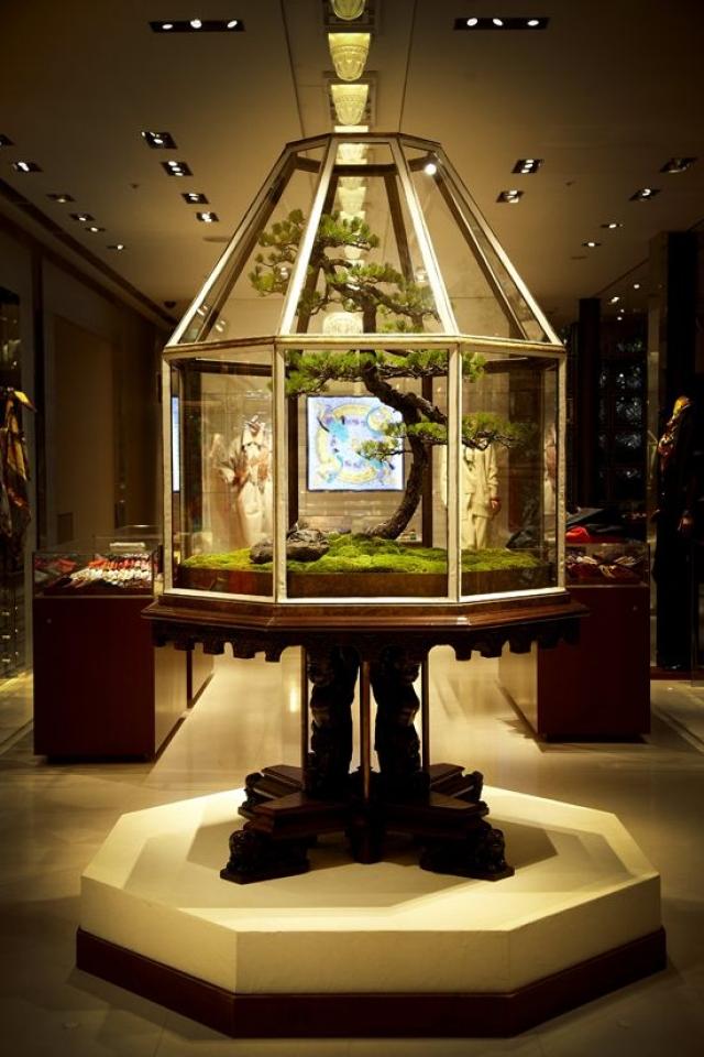 Maison Hermes window display by Flower Artist, with bonsai three inside a glass display.