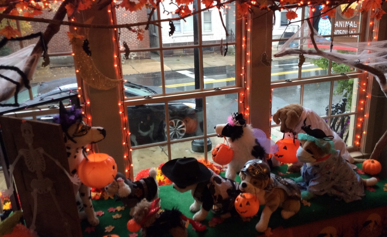 Halloween is also celebrated at the animal hospital, through the window display, decorated with plush dogs, leaves, lights and pumpkins.