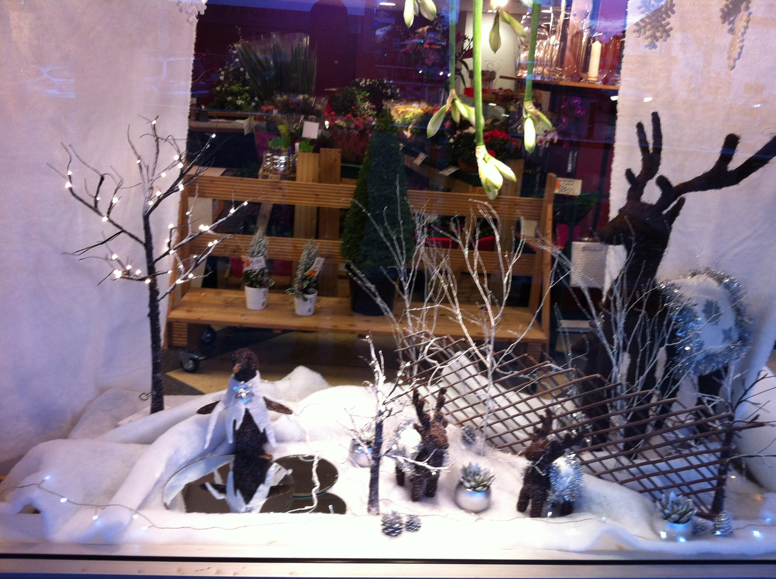 A stunning winter scene in this window display with little reindeer and trees adorned with lights.